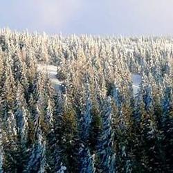 zima 31